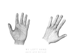 Life drawing of my left hand from parlmar and dorsal view, using graphite. -2016-