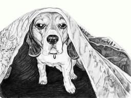 Beagle (CORSO) -2015-