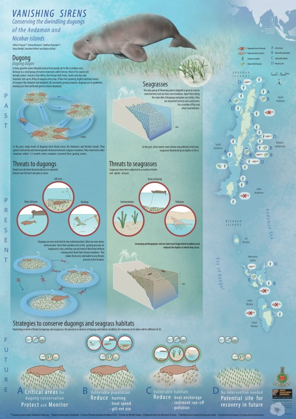 infographic dugong-01